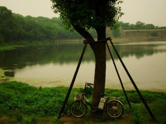 Bike,Tree,Lake