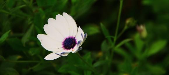 Flower at Huaca Pucllana