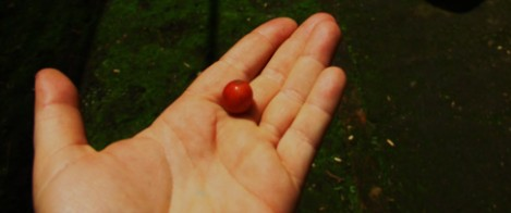 A Coffee Cherry