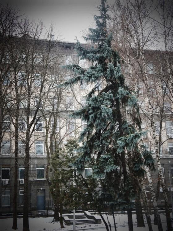 kiv1 008